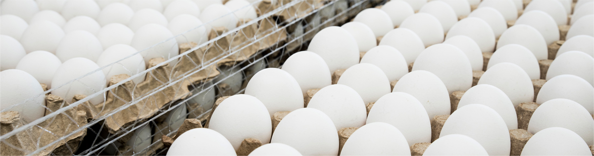 Poultry and Egg Distributor, Importer and Exporter